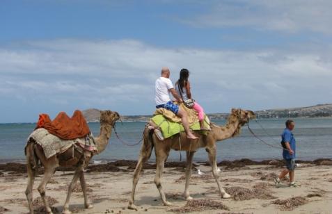 Kamel australien